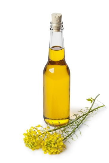 Rapeseed Oil in a Bottle on White Background